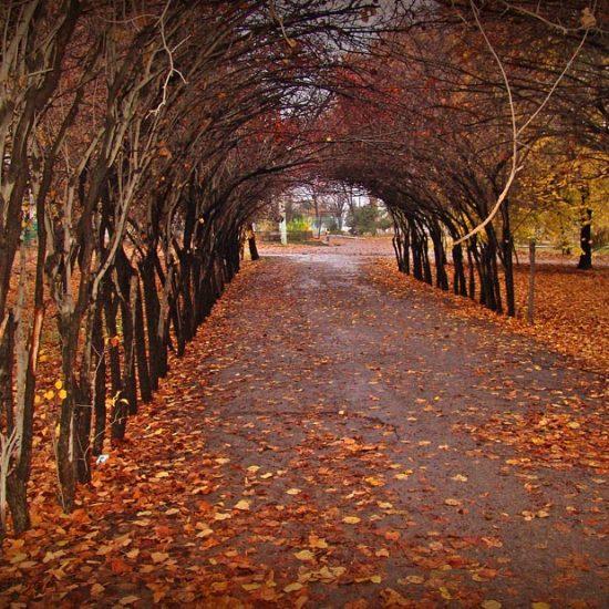Tashkent Botanical Garden Winters