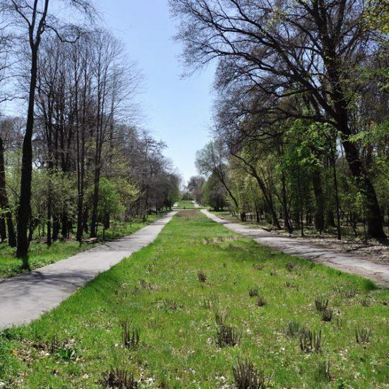 Tashkent Botanical Garden Summer