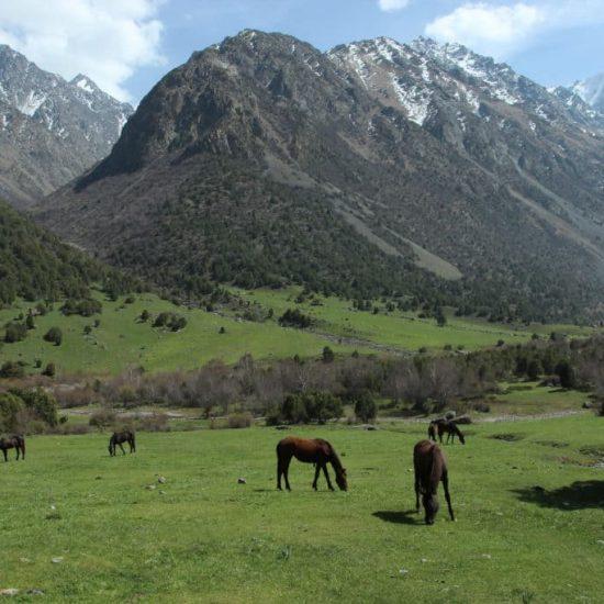 Alamedin Gorge Horse