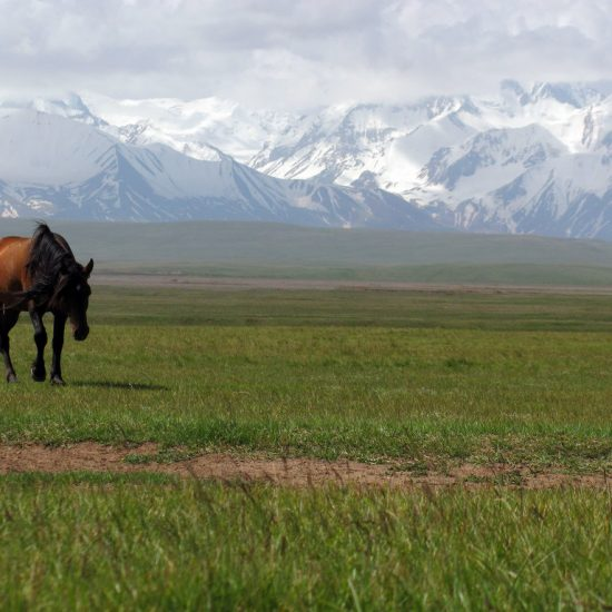 Alay Valley Horse