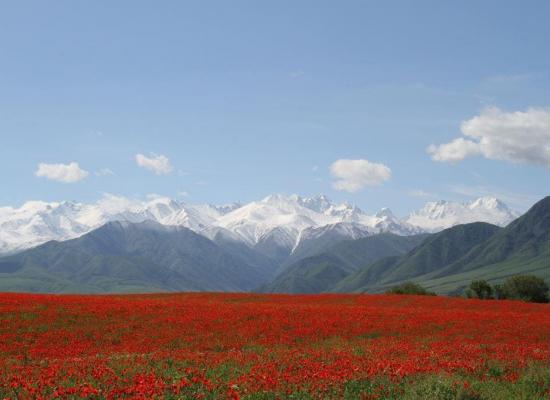 Chon-Kurchak Gorge Flowers