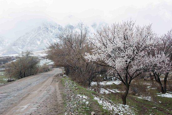 Chon-Kurchak Gorge Roadway