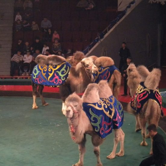 Fountain Circus Astana - Camel Show
