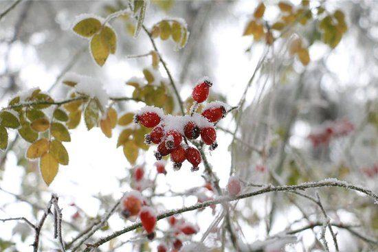 E. Gareyev Botanical Garden Winter