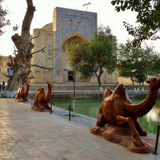 Lyab-i-Hauz Camel
