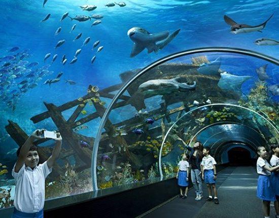 Duman Entertainment Centre Aquarium