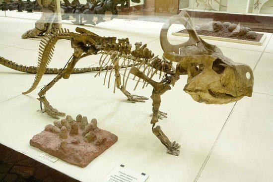 Orlov Paleontological Museum