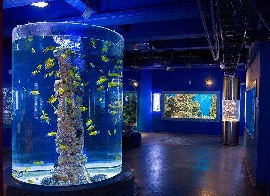 Planet Neptune Oceanarium - Small Fish