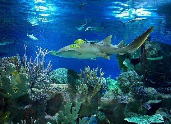 Planet Neptune Oceanarium - Sharks