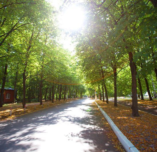 Sokolniki Park Moscow - Road