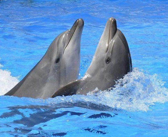 Dolphinarium Almaty