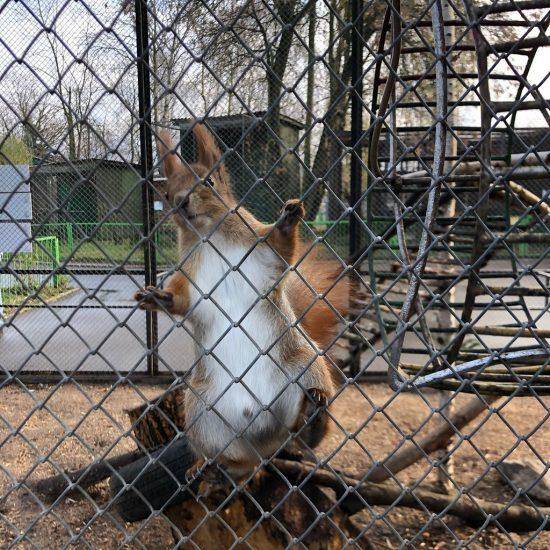 Minsk Zoo