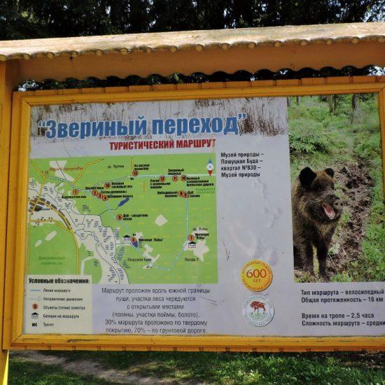 Bielaviežskaja pušča National Park