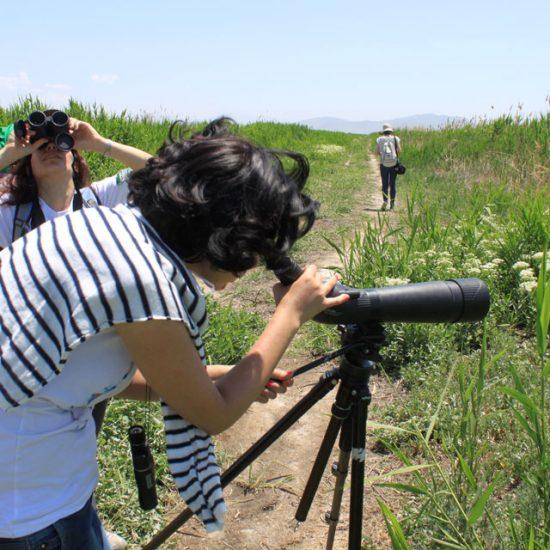 Bird Watching Yerevan
